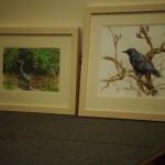C Saunderson birds1